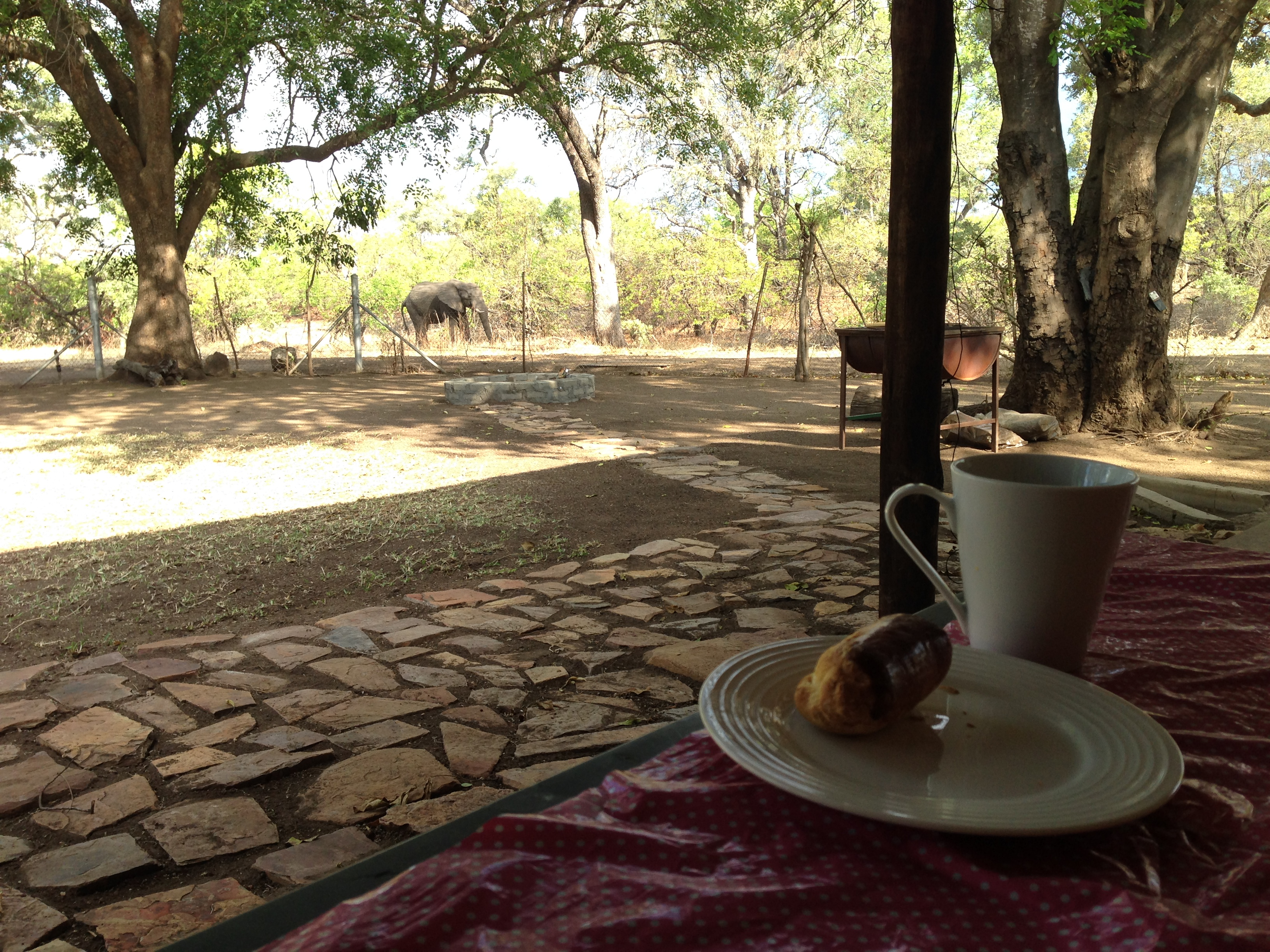 Our view from the Letaba house, KNP