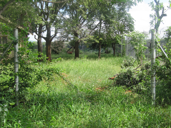 Garden fance flattened by elephants