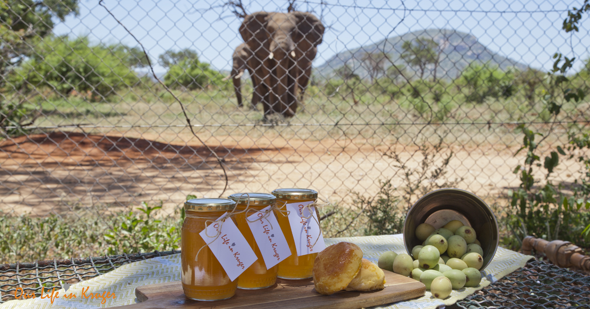 Our Life in Kruger Marula Jelly