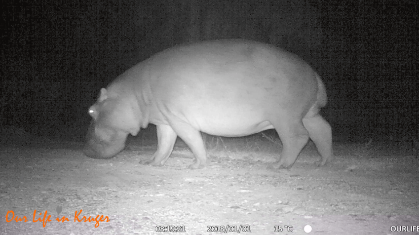 5 different species on our trailcam