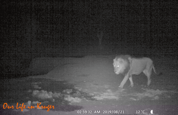 Our most spectacular trail cam footage yet!
