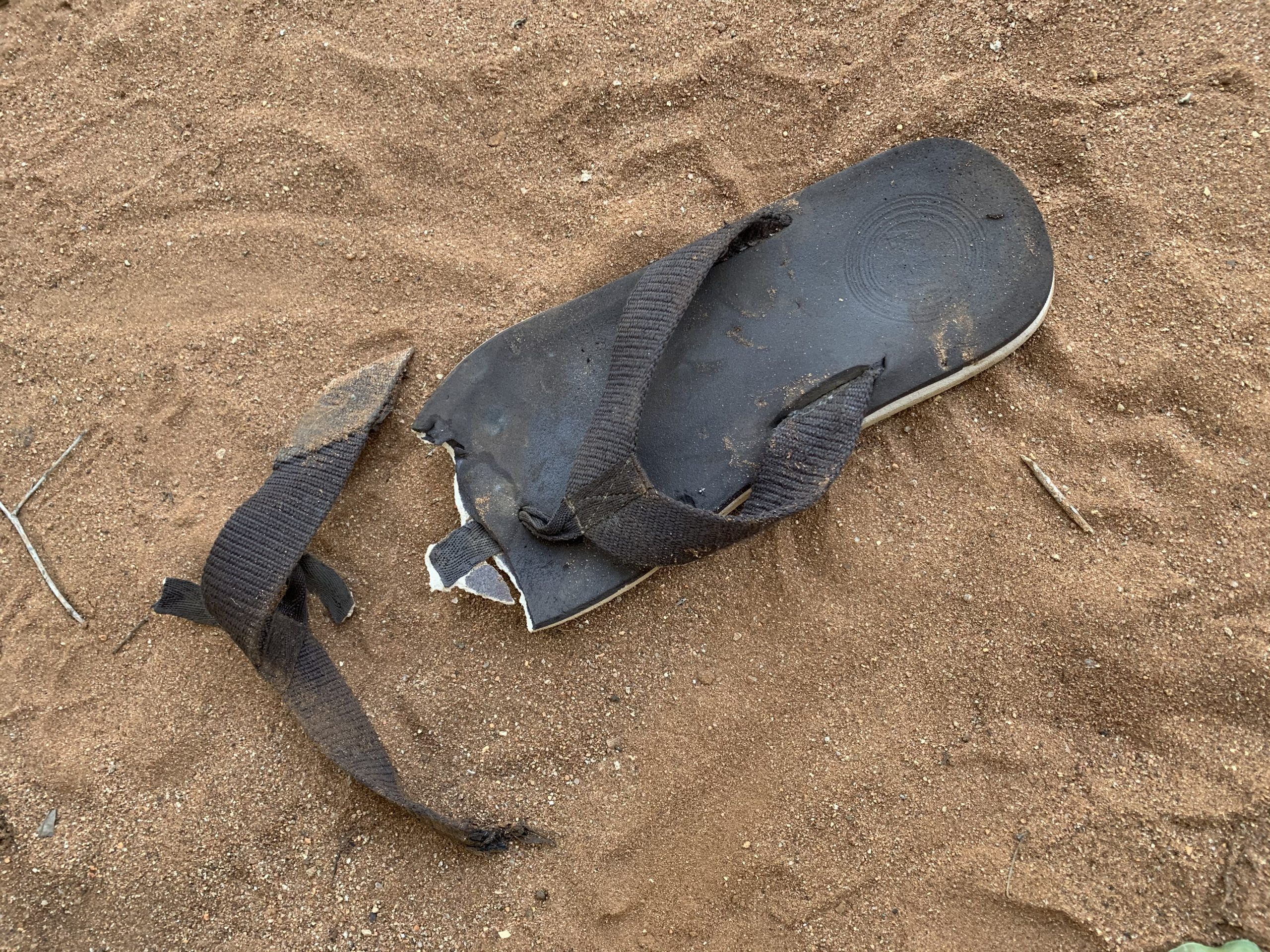 Honey, a hyena ate your flip flop