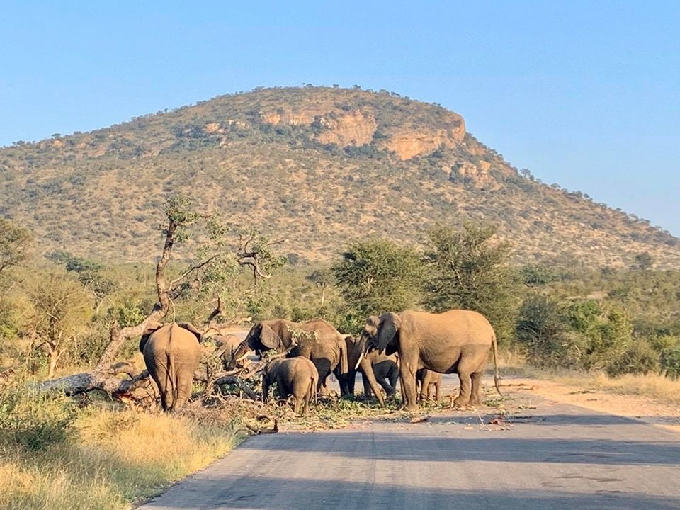 Kruger to Open for Day Visitors