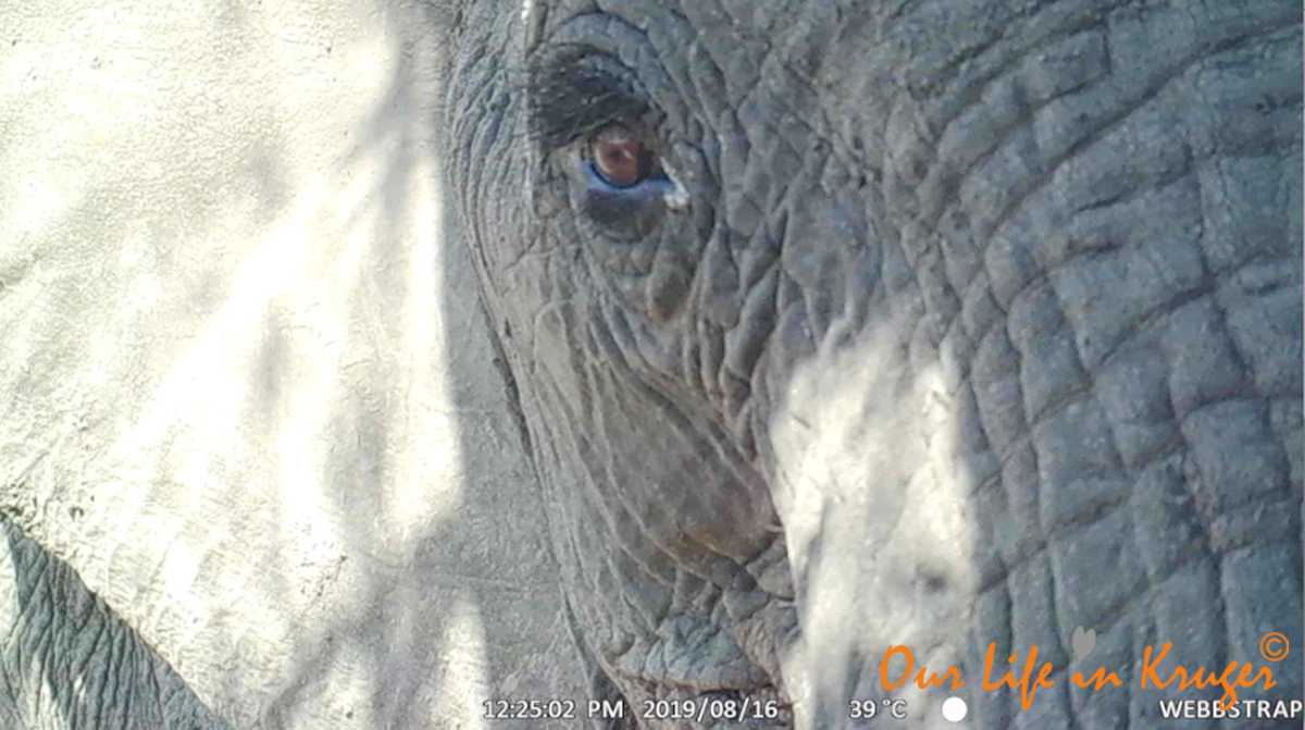 When elephants take a shine to your trailcamera